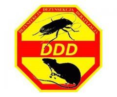 PRUSAKI PLUSKWY SKUTECZNIE FIRMA DDD