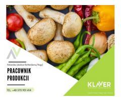 Produkcja owoców i warzyw Rotterdam/Haga- Holandia
